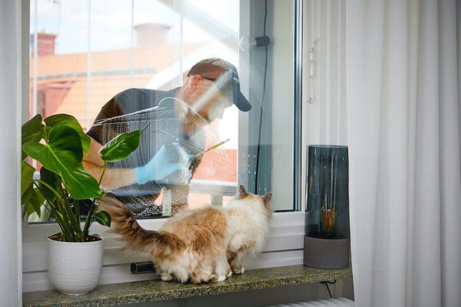 fönstertvätt-katt